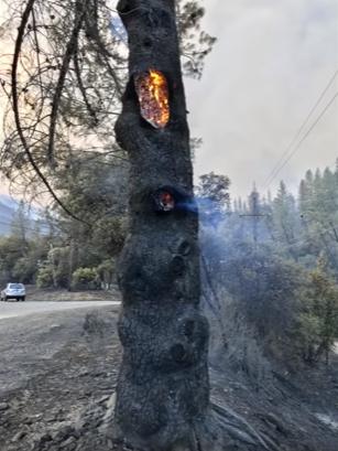 Tree burning from inside