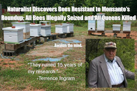 "Bee farm with no bees and a quote by Terrence Ingram saying ""They ruined 15 years of my research""."
