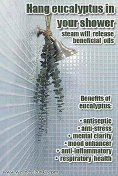 Eucalyptus hung on shower head to get health effects of eucalyptus